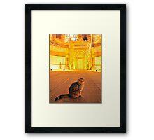 Cat n.13 Framed Print