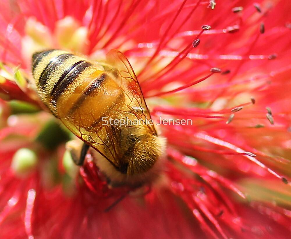 Bee Macro by Stephanie Jensen
