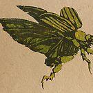 Christmas beetle 01 by Richard Morden
