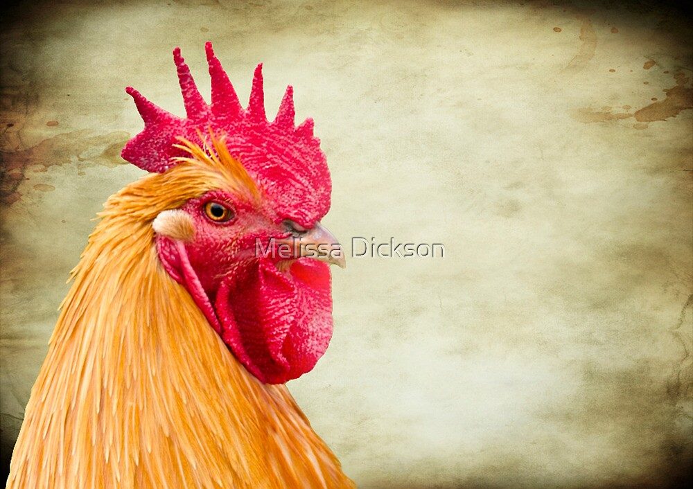 Rooster by Melissa Dickson