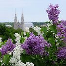 Lovely Lilacs by Sandra Fortier