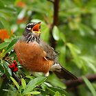 Red Robin by Laurie Puglia