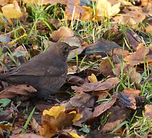 Bird hidden among the leaves by elainejhillson