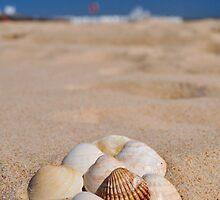 Seashells by Katarzyna Siwon