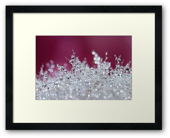 Snow Crystals by Amy Dee
