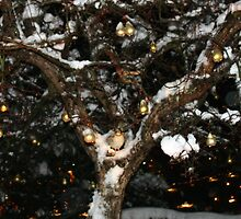 A Partridge in a Pear Tree by AnnDixon