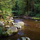 Dawn at Liffey Falls #2 Tasmania Australia by spyke