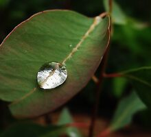 Droplet by mindy23