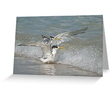 Crested terns in the waves Greeting Card