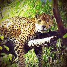 Jaguar! by Barry Hobbs