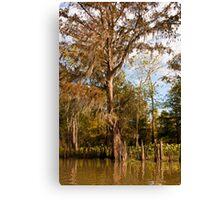 Cypress Trees & Cypress Knees Canvas Print