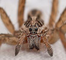 Itsy Bitsy Spider by Mambo