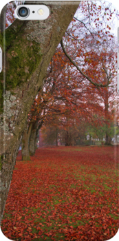 Red carpet of leaves by PatisPaton