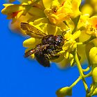 Big Bee by George I. Davidson
