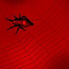 Red & Black Spider 2 by Dawne Dunton