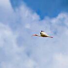 Ibis 1 Renewed by ©Dawne M. Dunton