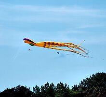 When Octopi Fly by Bob Wall