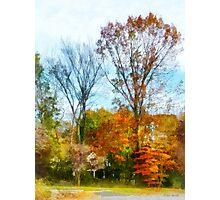 Tall Autumn Trees Photographic Print