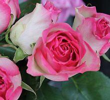 Pink Roses by KayleeRose