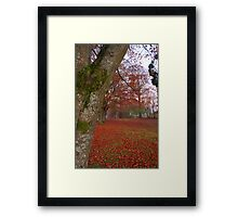 Red carpet of leaves Framed Print
