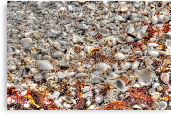 Blanket of Shells on Sanibel Island Beach in Florida by 242Digital
