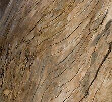 Wood by Morgan Wright