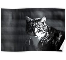 Hunting cat Poster