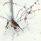 Winter Cardinal by Mary Kaderabek-Aleckson