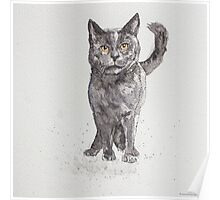 Swift Art, Cat Poster