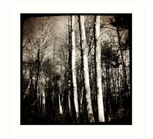 trees in the woods Art Print
