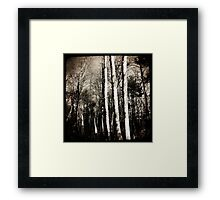 trees in the woods Framed Print