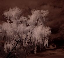 Weeping Willow In Infrared by Christina Bailey