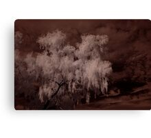Weeping Willow In Infrared Canvas Print