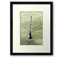 Common Bluetail Damselfly Framed Print