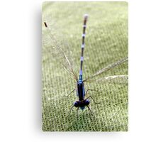 Common Bluetail Damselfly Canvas Print