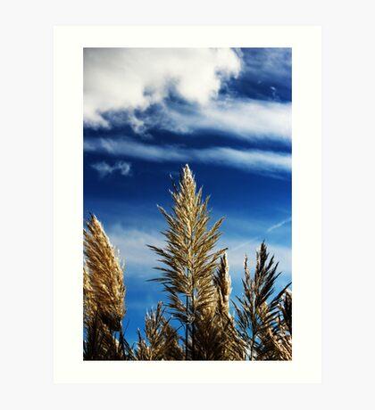 Blue Sky & Pampas Grass Art Print