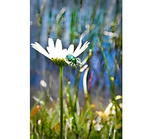 Green Scarab Beetle Photographic Print