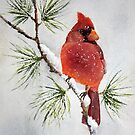 Mr Cardinal by Bobbi Price