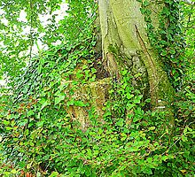 The Ivy Covered Tree Stump by Fara