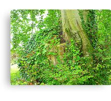 The Ivy Covered Tree Stump Canvas Print