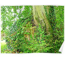 The Ivy Covered Tree Stump Poster