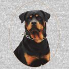 rottweiler by TheWorkingDog