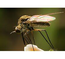 Fly Feeding Photographic Print