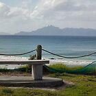 Seagulls at Mangawhai Surf Beach by amypie71