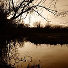 Wetland at Dusk by jrier