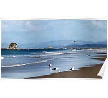 Seagulls feeding at Mangawhai Surf Beach Poster
