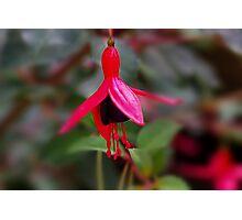 Flower 2 Photographic Print