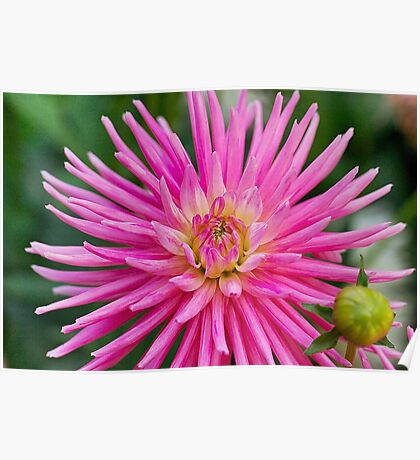 Flower 4 Poster
