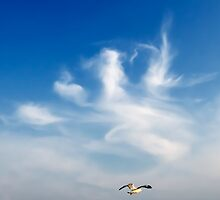 lonely seagull  by naphotos