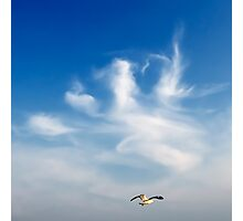 lonely seagull  Photographic Print